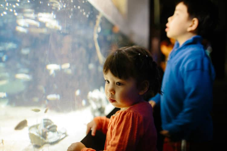 3 kid-friendly weekend trips from washington dc - national aquarium friday night baltimore