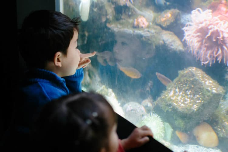3 kid-friendly weekend trips from washington dc -national aquarium with toddlers on a friday night