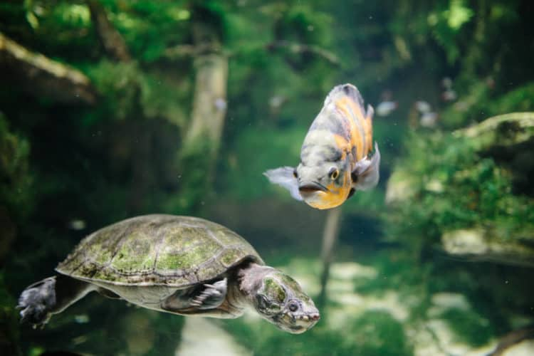 3 kid-friendly weekend trips from washington dc - turtle fish at the national aquarium