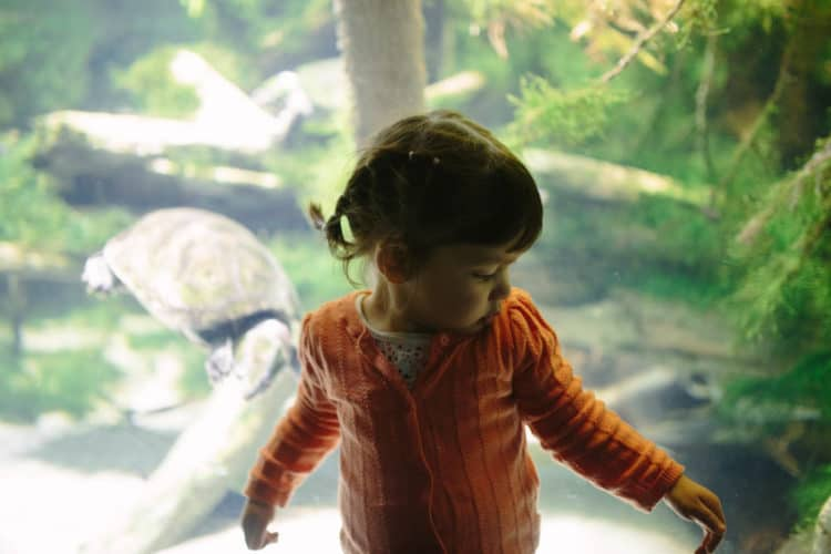 3 kid-friendly weekend trips from washington dc - national aquarium with a toddler